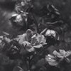 gloomy desaturated flowers