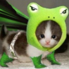 Super Froggity