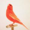 red bird on a perch