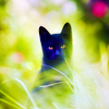 black cat with yellow eyes in green grass