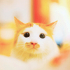orange and white cat face against blurred white and orange background