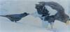 Ravens pull tales