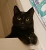 My cat Jack