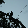 A small bird sitting on an upper tree branch.
