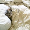 cat bundled up in blankets, living the dream, basically the way I want to live my life