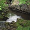 A clear stream flowing between stone banks with many patches of green leaves, grass and moss visible.