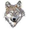 wee faol | little wolf