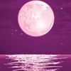 wings psl