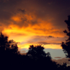 Storm clouds and sillouhetted trees, overlaying the sunset.