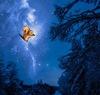 An orange, cartoon squirrel tumbles through a starry sky.