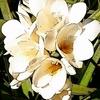 Montage en deux couleur sur une photo de Barbara