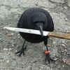 a crow with a knife