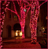 Trees covered in red/pink lights