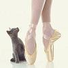 Russian Blue kitten and ballerina