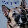 malnpudl (malinois) by lostgirlslair