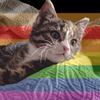 a kitten on a blanket, overlaid with the Philly Pride Flag