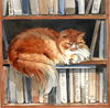 Fluffy cat in bookshelf.
