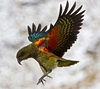 This is a stock image. I'm not awesome enough to sneak up on a kea like this.