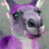 The magical purple kangaroo!