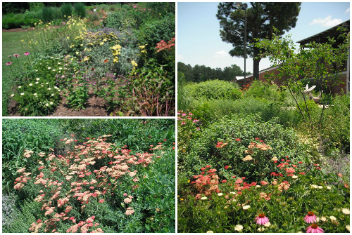 pollinator garden inspiration