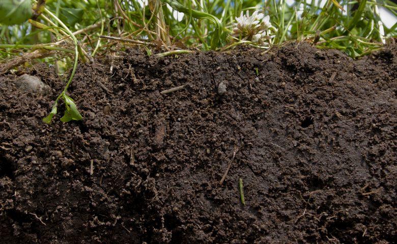Healthy Soil 1