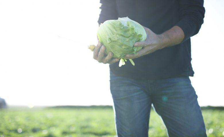 Holding Lettuce Head