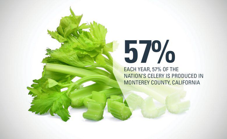 Monterey County Celery
