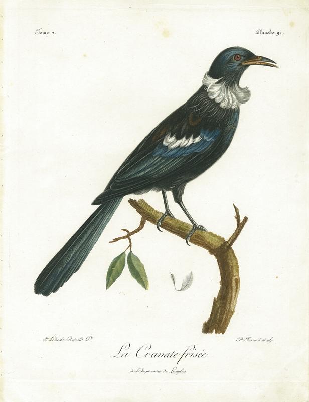 Tui (Prosthemadera novaeseelandiae), 'La Cravate frisée', plate 92 from Histoire naturelle des oiseaux d'Afrique. Vol. 2.