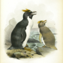Report of the Scientific Results of the Voyage of H.M.S. Challenger during the years 1873-76…. Zoology, Vol. II