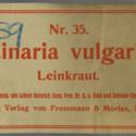 Linaria vulgaris  Nr35 Ad39.jpg