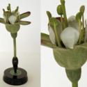 Botanical model.jpg