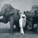 CAB 4 Elephants.jpg