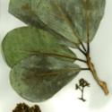Herbarium1.jpg