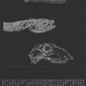 S16-597b   Ephemera - Hocken Exhibition Posters - Web JPEG.jpg