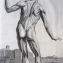 The Anatomy of Humane Bodies, with Figures Drawn after the Life by Some of the Best Masters