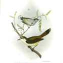 The Zoology of the Voyage of H.M.S. Erebus & Terror: under the command of Captain Sir James Clark Ross, R.N., F.R.S., during the years 1839 to 1843