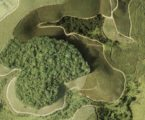 A theory of physics explains the fragmentation of tropical forests