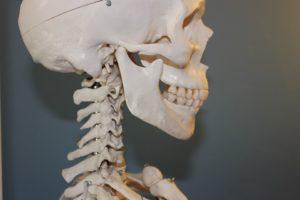 TMJ chiropractor alamo