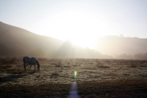 sunrise Camino Tassajara