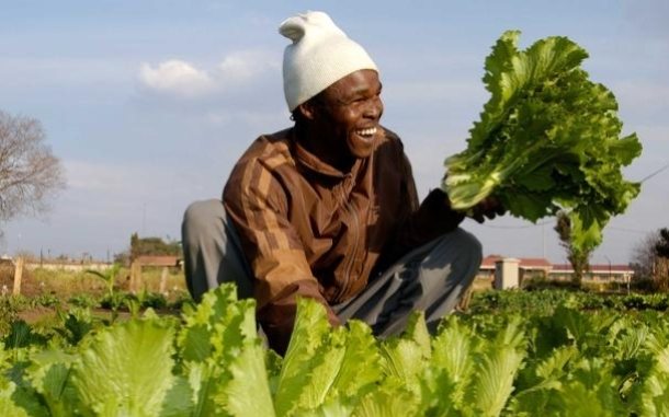 Lettuce farmer in South Africa. Photo: Brett Eloff/Oxfam America