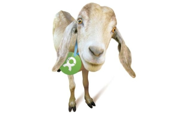 Unwrapped product: goat. Oxfam America 2013.