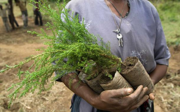 $18 can plant 30 trees