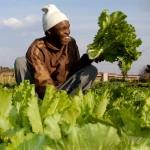 Plant a vegetable garden