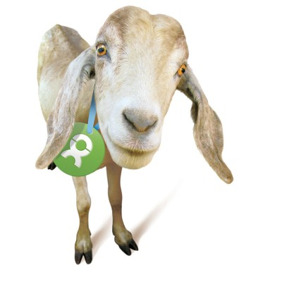 buy a goat from Oxfam