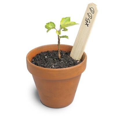 Plant 500 trees