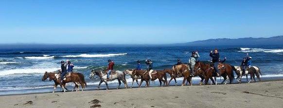 Horse N Around Trail Rides - Bodega Bay, CA
