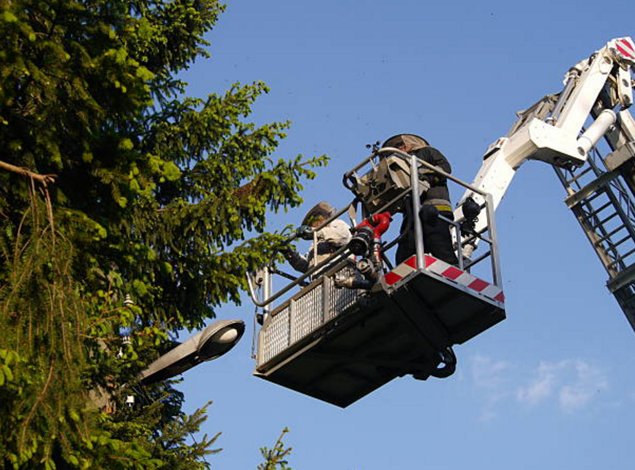 Dittman Tree Service - New Baltimore, MI