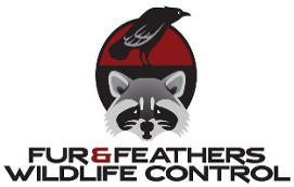 Fur & Feathers Wildlife Control