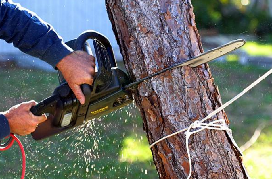 Carty's Tree Services - Berlin Heights, OH