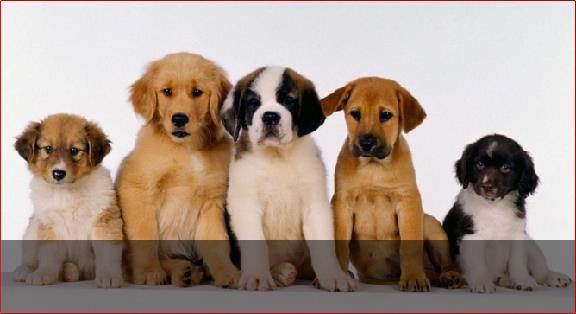 Lewisville North Animal Clinic PC - Lewisville, TX